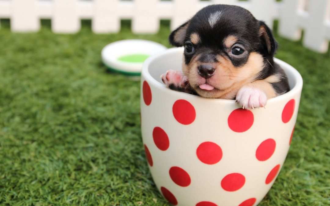 Choosing a Dog to Fit Your Lifestyle and Personality